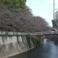 Sakura2018_001