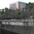 Sakura2018_003