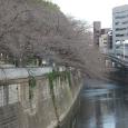 Sakura2018_006