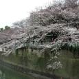 Sakura2018_019