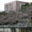 Sakura2018_020