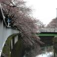 Sakura2018_021