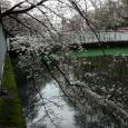 Sakura2018_022