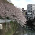Sakura2018_023