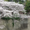 Sakura2018_027