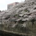 Sakura2018_028