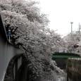 Sakura2018_029