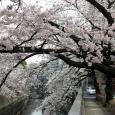 Sakura2018_034
