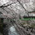 Sakura2018_030
