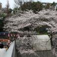 Sakura2018_033