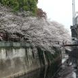 Sakura2018_026