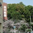 Sakura2018_035