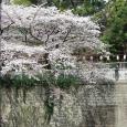 Sakura2018_037