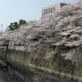 Sakura2018_038