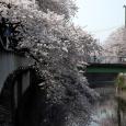 Sakura2018_039