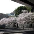 Sakura2018_044