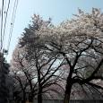 Sakura2018_040