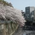 Sakura2018_043