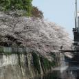 Sakura2018_036