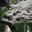Sakura2018_045