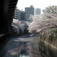 Sakura2018_047
