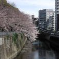 Sakura2017_053