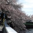 Sakura2017_051