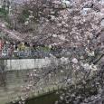 Sakura2017_056