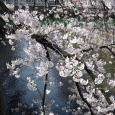 Sakura2017_052
