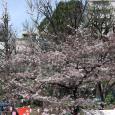 Sakura2017_055