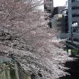 Sakura2017_054