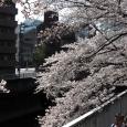 Sakura2017_085