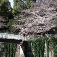 Sakura2017_090
