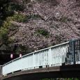 Sakura2017_089