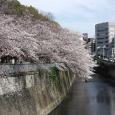 Sakura2017_097