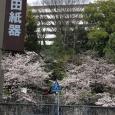 Sakura2017_091
