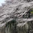 Sakura2017_094