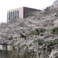 Sakura2017_095