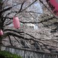 Sakura2017_100