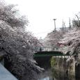 Sakura2017_096