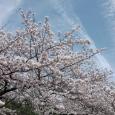 Sakura2017_099