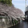 Sakura2017_092