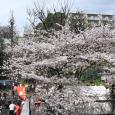 Sakura2017_098
