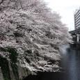 Sakura2017_115