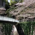 Sakura2017_134