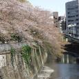 Sakura2017_143