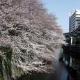 Sakura2017_064