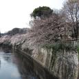 Sakura2017_058