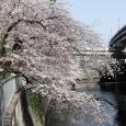 Sakura2017_062