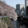 Sakura2017_067